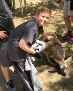 Lucas kangaroo